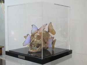 Vitrine pour un Crâne de Philippe Pasqua